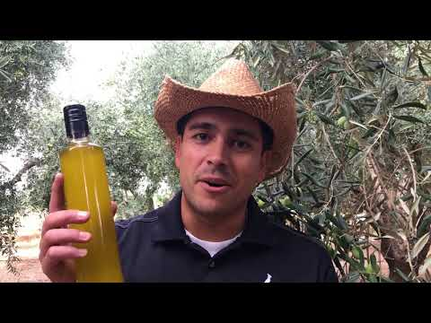 Olio Nuovo EVOO - The Best Time of Year for California Olive Oil