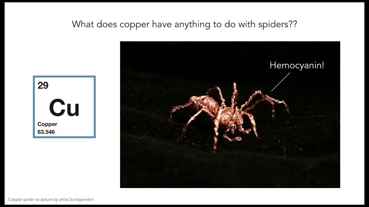 Ashley Adams Wikipedia everything matters | copper | seira ashley adams | exploratorium