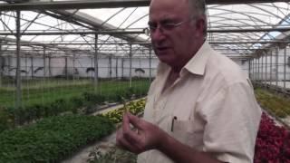 Plantas que curan plantas prohibidas con Josep Pmies