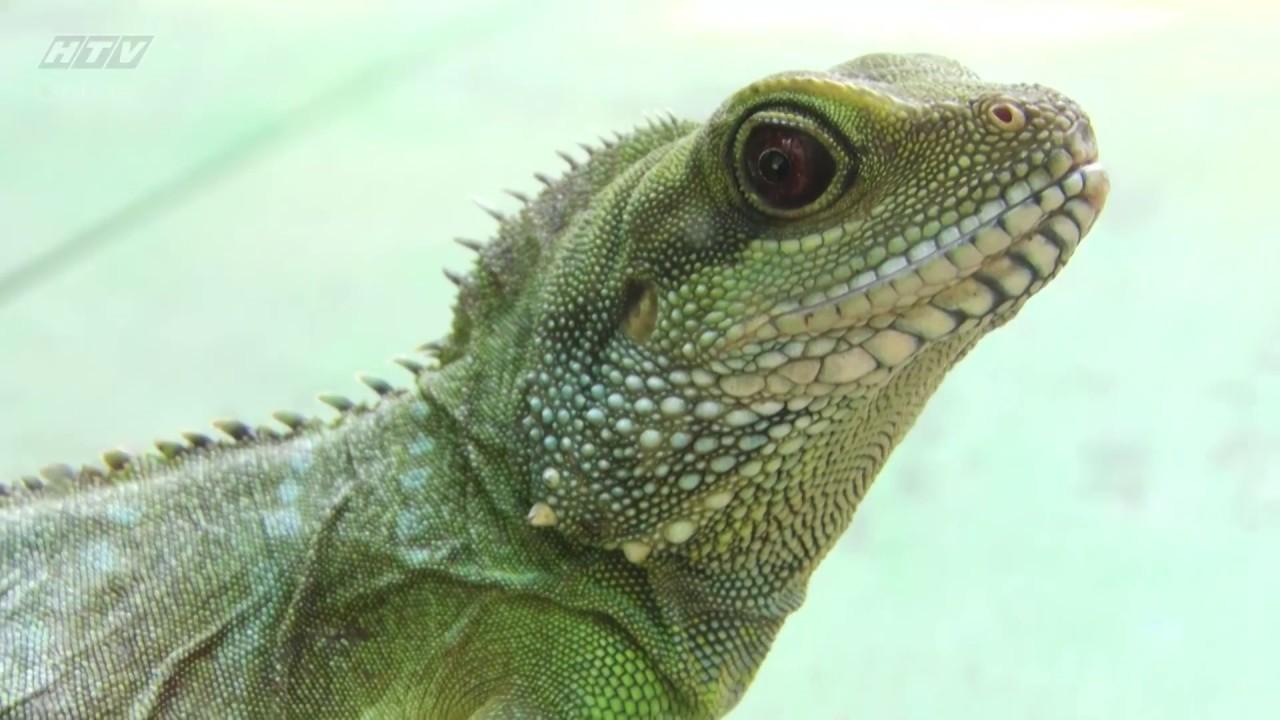 Khám phá thành phố trẻ | Bảo vệ động vật hoang dã | HTV KPTPT | 17/10/2017