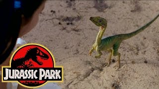 The History of the Compsognathus in the Jurassic Park Franchise