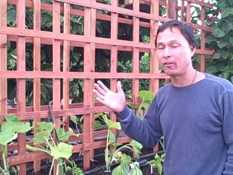 How to Build a Monster Garden Trellis to Grow Kakai Pumpkins Vertically