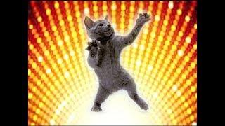 КОШКИ УМЕЮТ ТАНЦЕВАТЬ!!!)  ЗДЕСЬ ЖАРКО! ТАНЦУЮЩИЕ ЖИВОТНЫЕ! DANCING ANIMALS!
