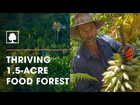 Incredibly Diverse 17-Year-Old Syntropic Food Forest - The Food Forest Farmers