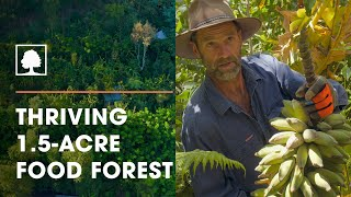 Incredible 1.5-Acre Permaculture / Syntropic Food Forest with Over 250 Plant Species