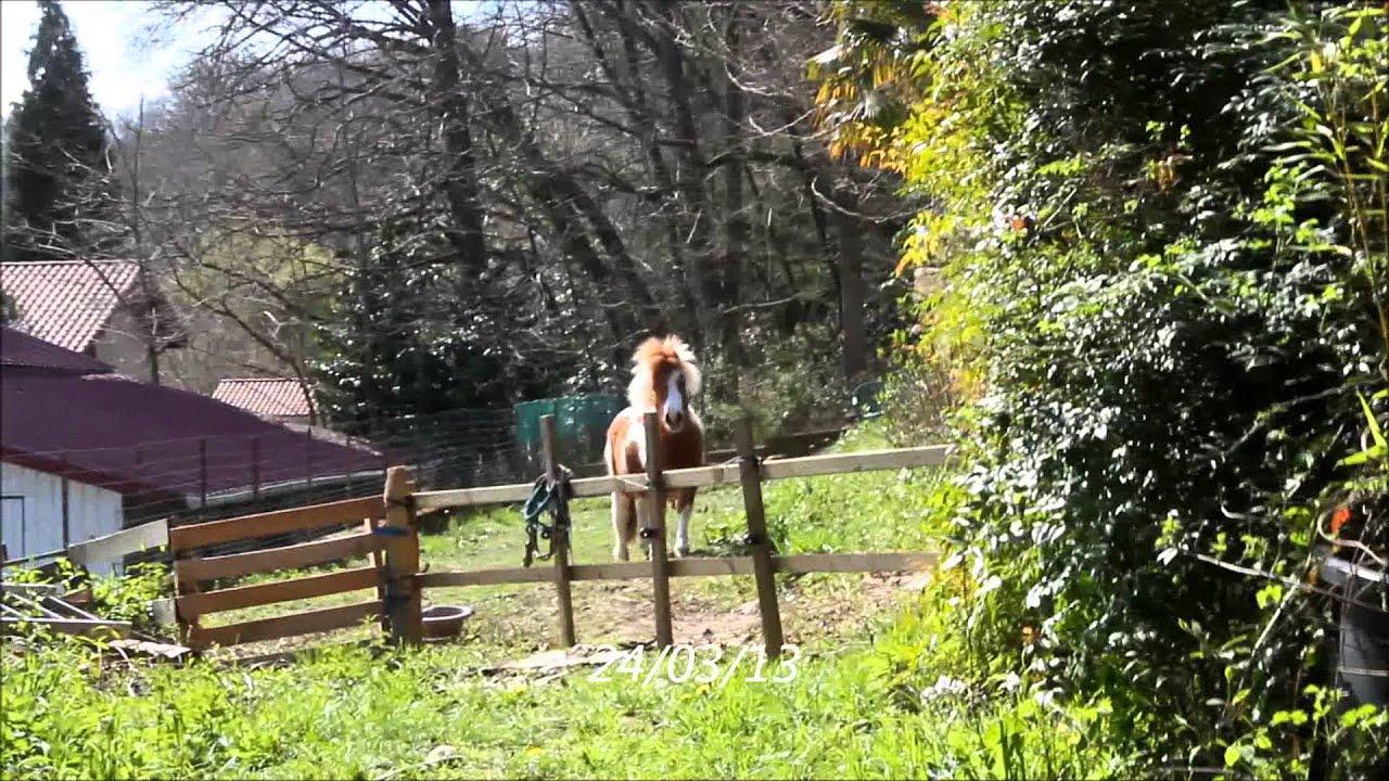 poney qui hennit