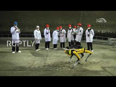 """Ukraine: """"Spot"""" the robotic dog sniffs out radiation at Chernobyl's nuclear plant"""