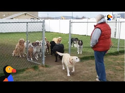 Thumbnail: Good Dogs Wait For Their Names To Be Called | The Dodo