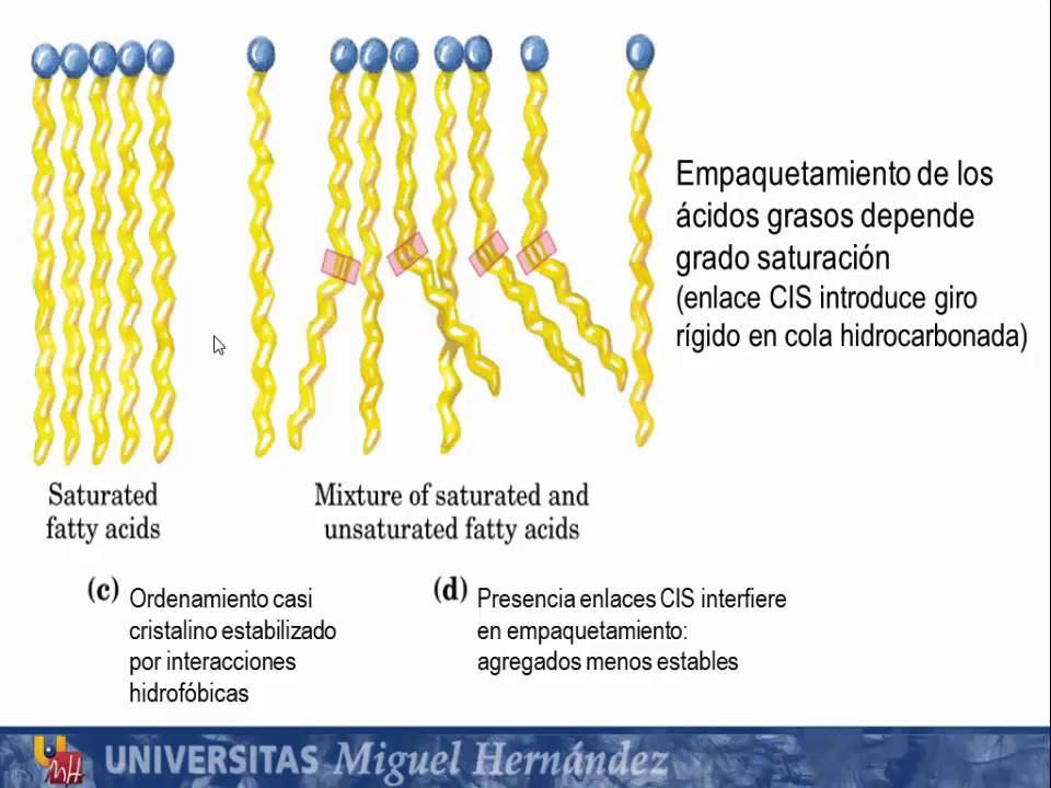 Tema 4 1 Clasificación Estructura Y Propiedades De Los Lípidos S1 Lípidos Simples Umh1163