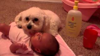 Protecting his baby sister (ORIGINAL) thumbnail