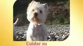 Royal Canin West Highland White Terrier 21-su Mascota.es-su Tienda Online De Confianza