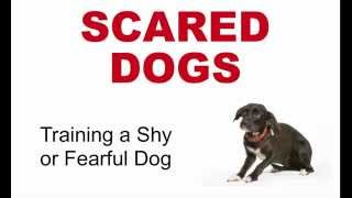 Scared Dogs: Training A Fearful Dog
