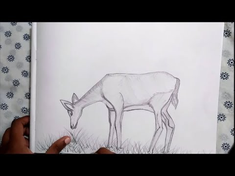 how-to-draw-a-deer-eating-grass-with-pencil-step-by-step-easily-!!-#drawing