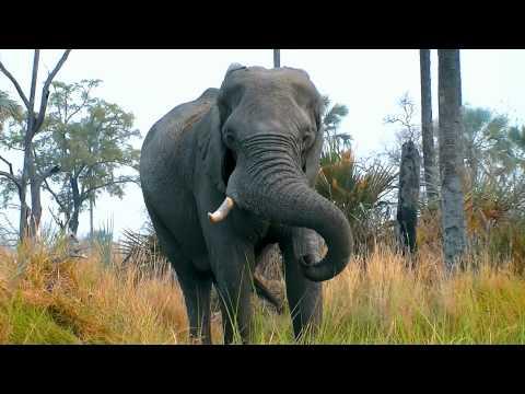 African Wildlife - Krugerpark Okavango Delta Chobe Victoria Falls - SPutnick Productions