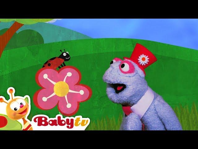 Flowers and Animals | BabyTV
