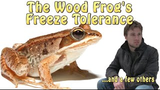 The Wood Frog s Freeze Tolerance
