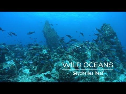 Seychelles Coral Kingdom