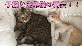 ティガロビニック再会!!一切離れずくっついて寝る3人が可愛すぎる! thumbnail