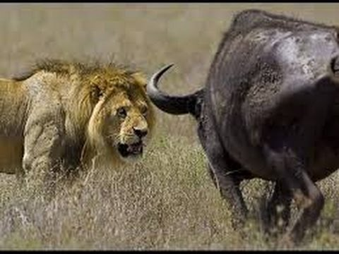 ► Animals Documentary - ¡¡Africa Animals eXtreme!! - WILD National Geographic   HD