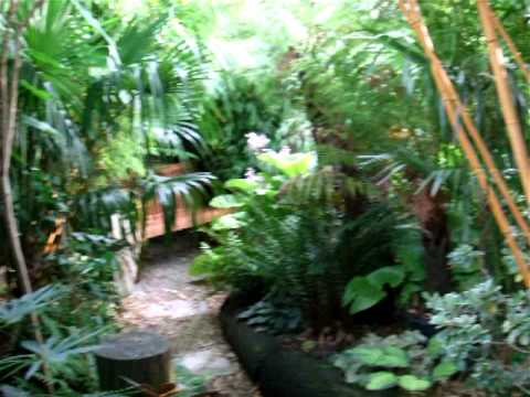 Our Tropical Garden - August 2011 - YouTube