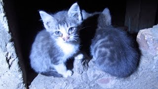 Someone abandoned five kittens