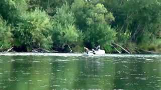 видео: Браконьеры на Камчатке