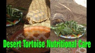 Desert Tortoise Nutritional (Diet) Care ❤