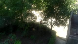 Recunoaște că nu ea a sădit copacul, dar lovește băiatul ce vrea să strângă nucile #Cernăuți