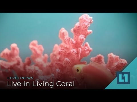 level1-news-december-19-2018:-live-in-living-coral