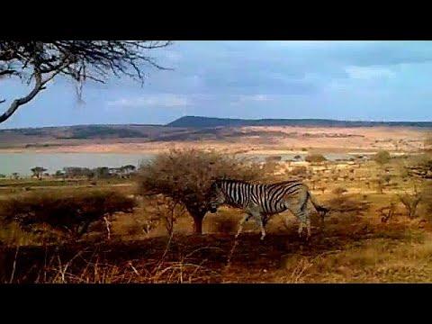 Spioenkop Dam And Nature Reserve - Zebra And Antelope