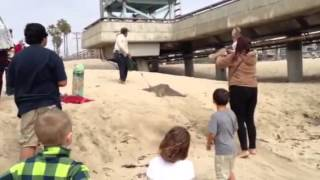 lady goes crazy at venice beach over stingray catch part 2