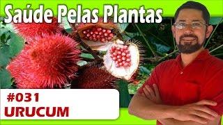 Planta muito poderosa capaz de DESTRUIR A DIABETES, hemorroidas, bronquite, hepatite, febre e muito mais
