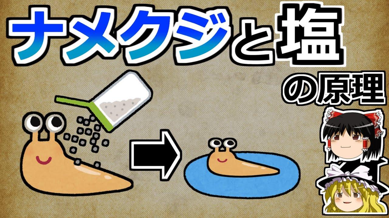 【ゆっくり解説】ナメクジはなぜ塩で溶けるのか?