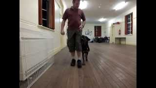Lady Lara's Diary Part 14 Basic Obedience Training (10 Months Old)