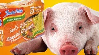 بالتاكيد لن تأكل الاندومي بعد مشاهدة هذا الفيديو |  IndoMie