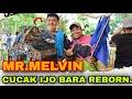 Perang Bintang Mr Melvin Cucak Hijau Bara Is Back  Mp3 - Mp4 Download