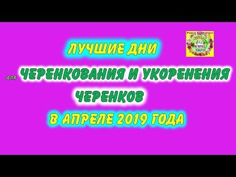 Лучшие дни для черенкования и укоренения черенков в апреле 2019 года