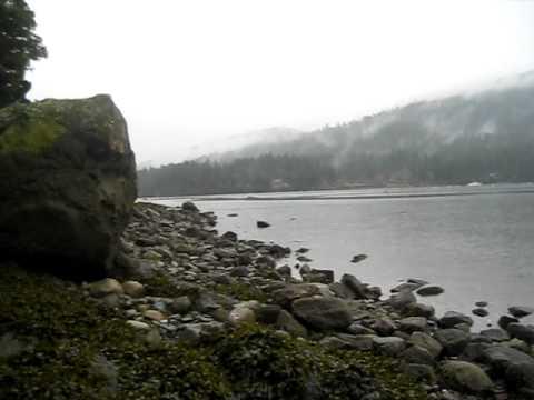 Harvesting Fresh Oysters / Salt Spring Island
