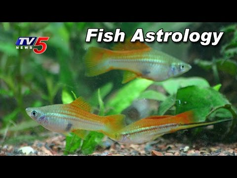 Lucky Fish | Fish Aquarium In Home | High Importance in Vastu Shastra | TV5 News