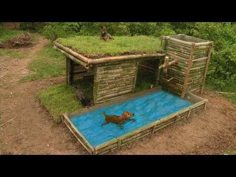 Build Beautiful Wild Dog's House With Shower Pool