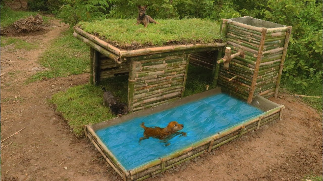 Dog House Build Beautiful Wild Dog S House With Shower Pool