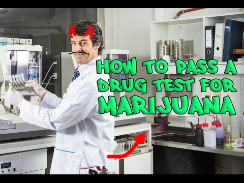 How To Drug Test No Bull Plus Myths Exposed