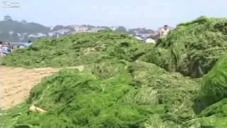 中国の海 緑がいっぱいになった Who Said China Wasn't Green