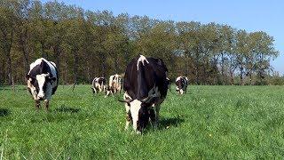 L'élevage bio des vaches laitières à la Bergerie nationale