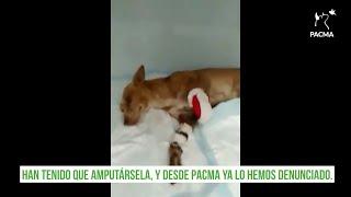 PACMA denuncia un caso de maltrato animal a una perra