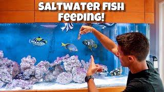 feeding-exotic-aquarium-fish-live-shrimp