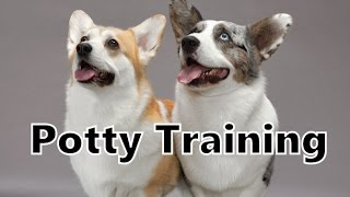 How To Potty Train A Corgi Puppy - Corgi House Training Tips - Housebreaking Corgi Puppies Fast