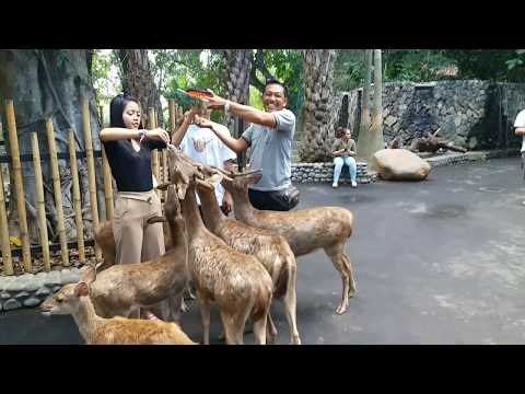 something-happend-with-the-kids-in-bali-zoo-so....