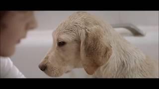 Se ami il tuo cane devi vedere questo video UNA VITA INSIEME..