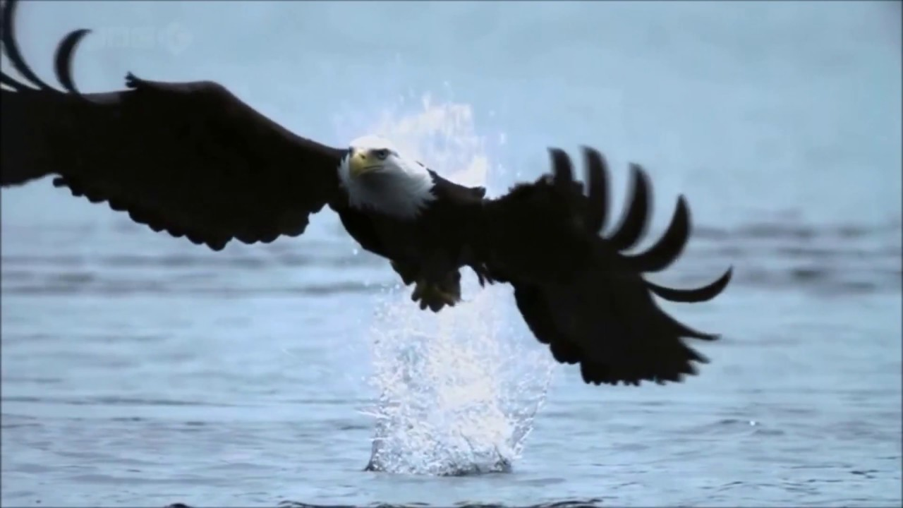 Fly Like An Eagle ~ Steve Miller Band { Music Video &  Lyrics } HD